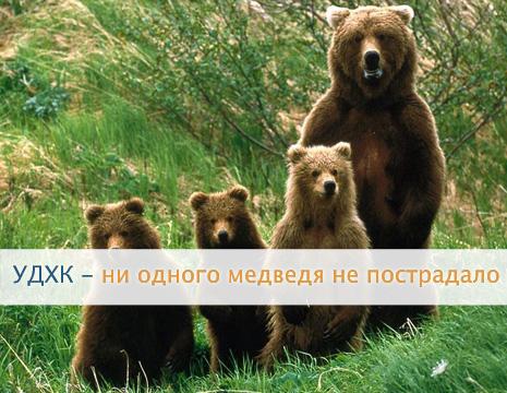 Что лечат медвежьей желчью? Воздействие на организм. Свойства и применение медвежьей желчи.